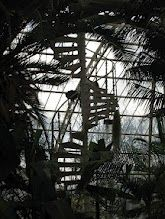 The Palm house copyright mrsrosneypictures
