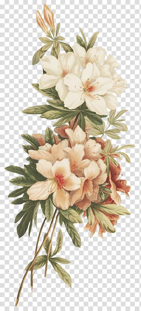 Flores Vintage White And Pink Flowers Transparent Background Png Clipart Vintage Flower Backgrounds Flower Aesthetic White Flower Png