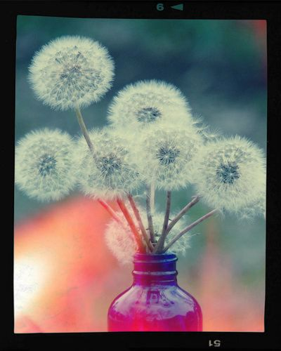 Beautiful dandelions...picture for the bathroom???