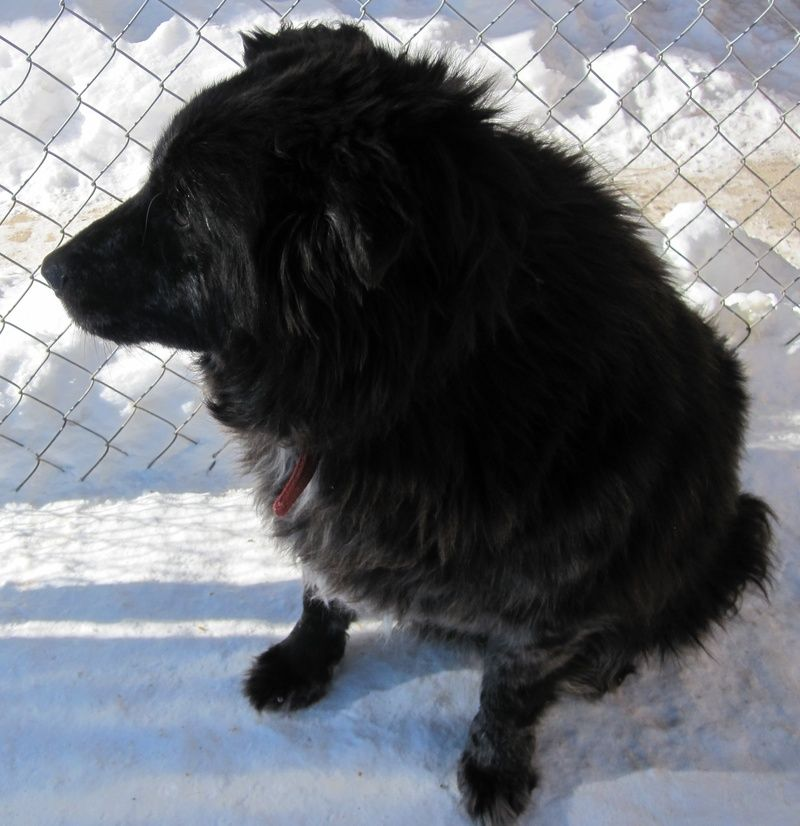 S DAKOTA My owner is elderly and can no longer provide the care I need.  I am 8 years old and am an outside dog, but I love to be with people.  I do have an odd combination of hair so do require grooming.  I like to go for walks.