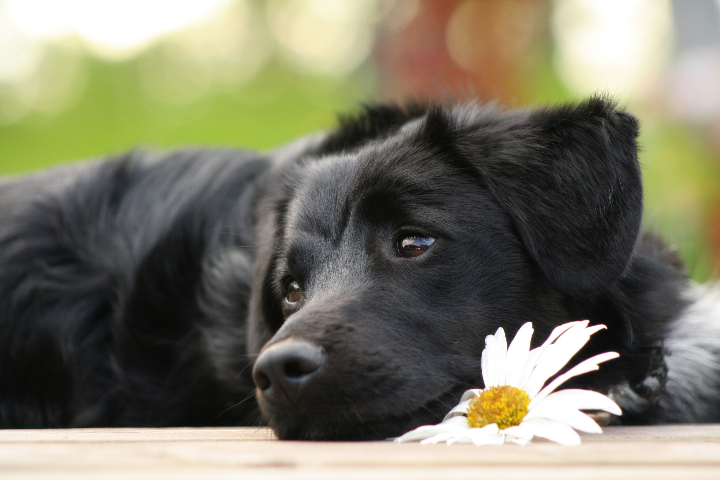 In Romania bruciati vivi 70 cani randagi