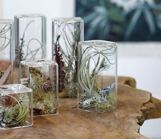 Wall Vases With Indoor Air Plants