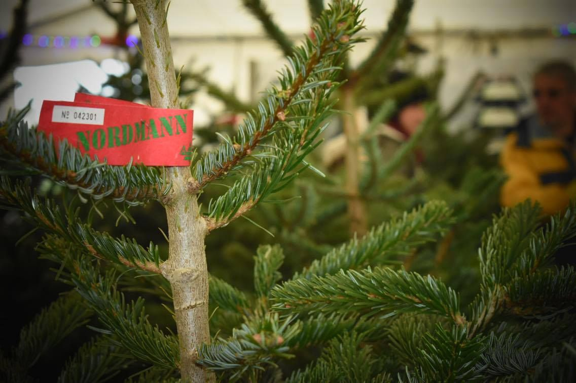 Top Tips for Looking After a Real Christmas Tree Real
