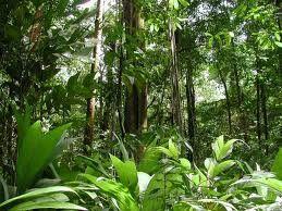 Amazon Rain Forest Brazil Vacation Spots Rainforest
