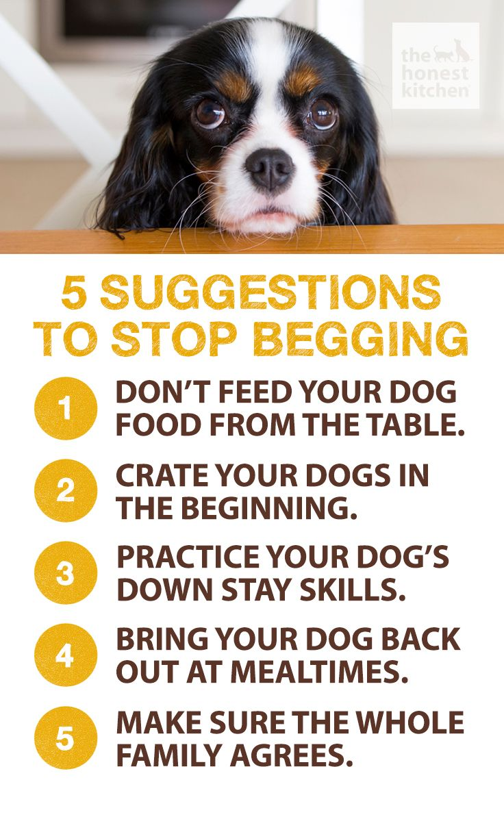 Begging Is A Common Behavior That Pet Owners Inadvertently Teach