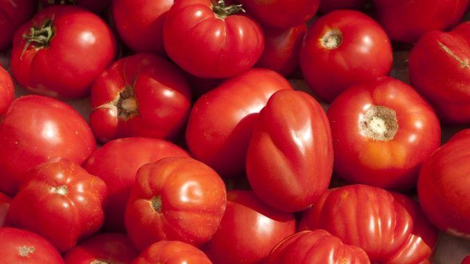 Mutti Tomaten Herkunft