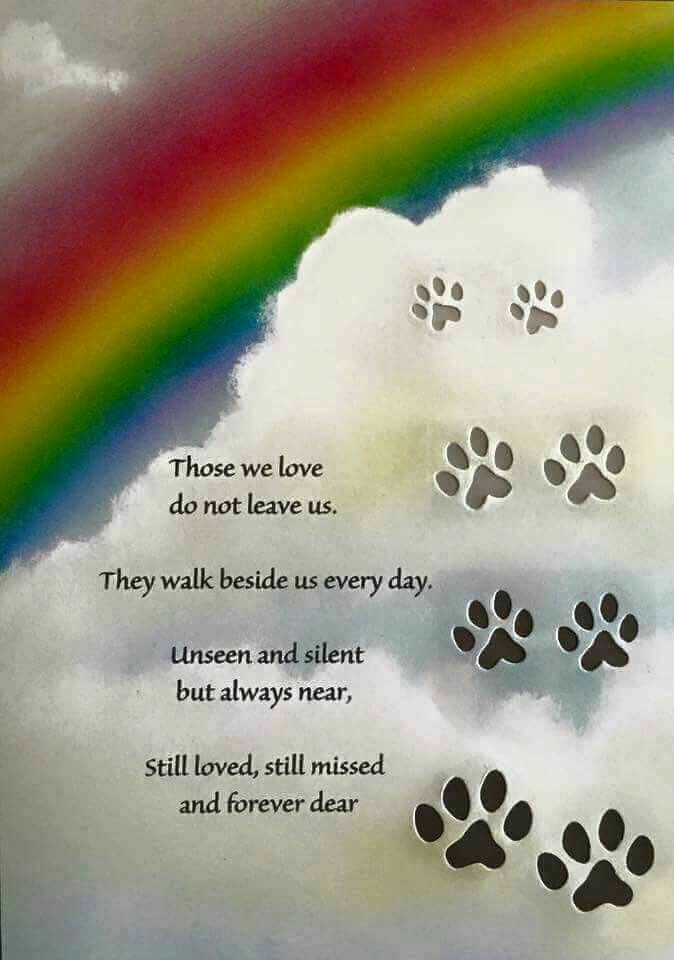 Always by your side. Rest in Peace little Cookie.(Our sons ...