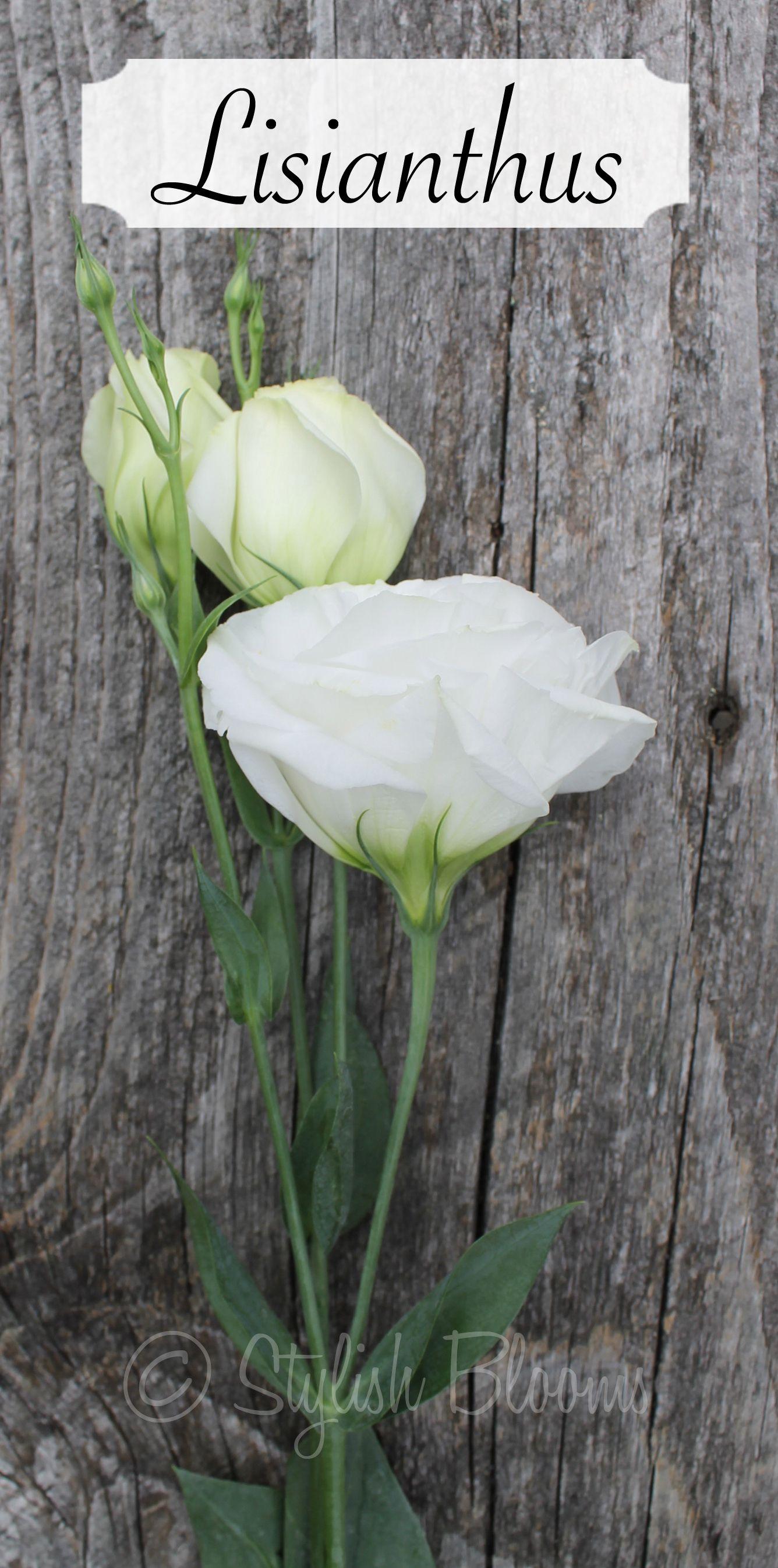 White Lisianthus White wedding flowers, Wedding flowers