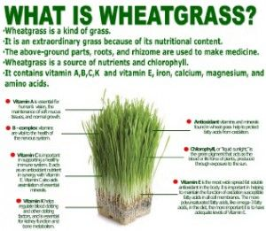 What Is Wheatgrass Tummy Party Pinterest Wheat