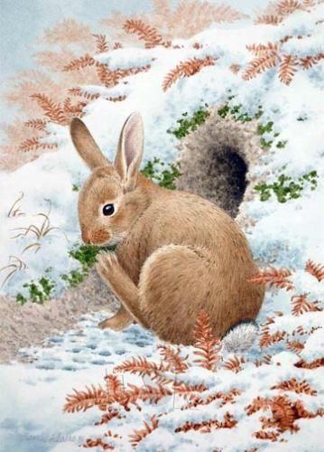 bunny outside its borough bunnies bunny art bunny. Black Bedroom Furniture Sets. Home Design Ideas