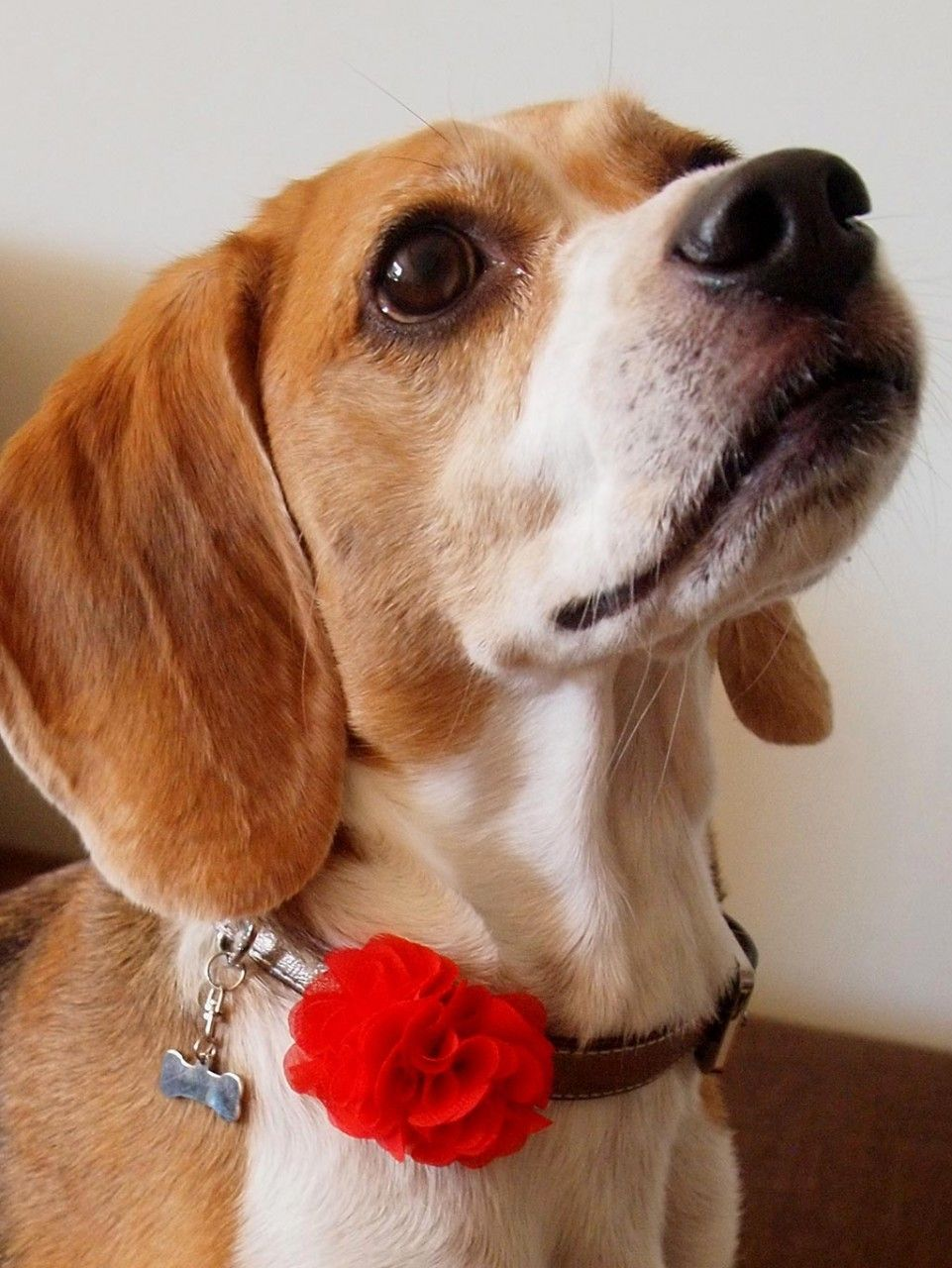 Florette Floral Collar Sliders Pet Products Dogs Puppy Dog