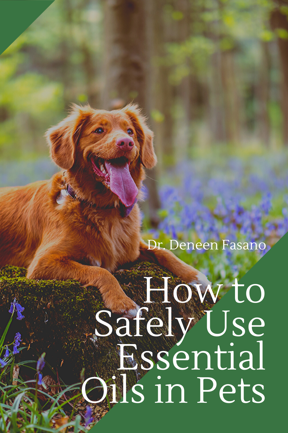 Holistic Veterinary Blog Aromatherapy For Dogs Healthy Pets Pets