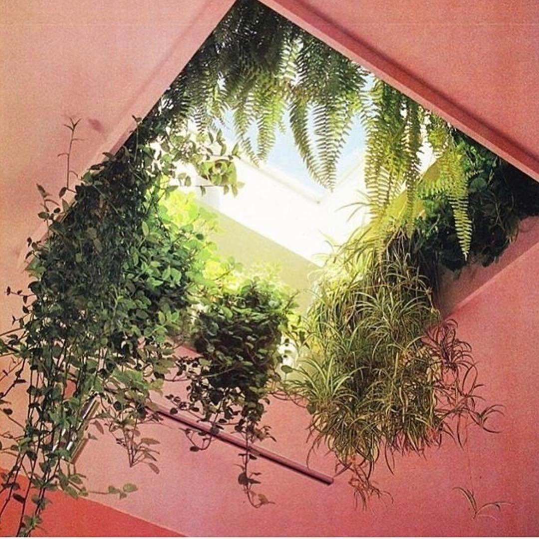 Skylight Courtyard: #WhoShotThis?