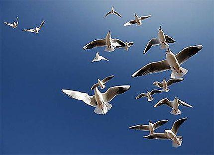 Fly Me To Montreux Nord Pas De Calais Nord Pas De Calais Birds