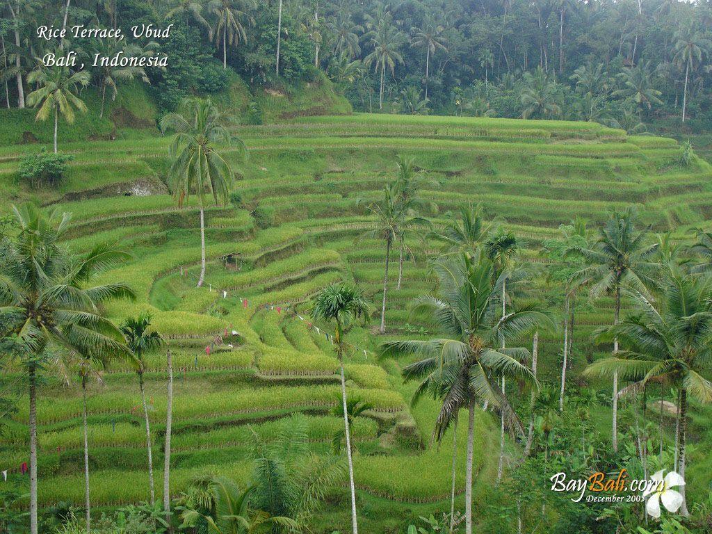 Ubud, Bali (where we had our honeymoon in 1999.)