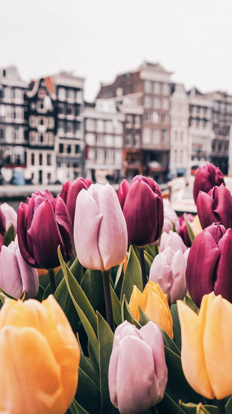 картинка города голландия тюльпаны народ непобедим это