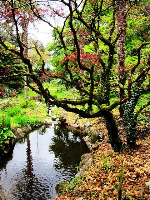 Gardens at Glenveagh Castle, Donegal, Ireland Michaela McDavitt by APIstudyabroad, via Flickr