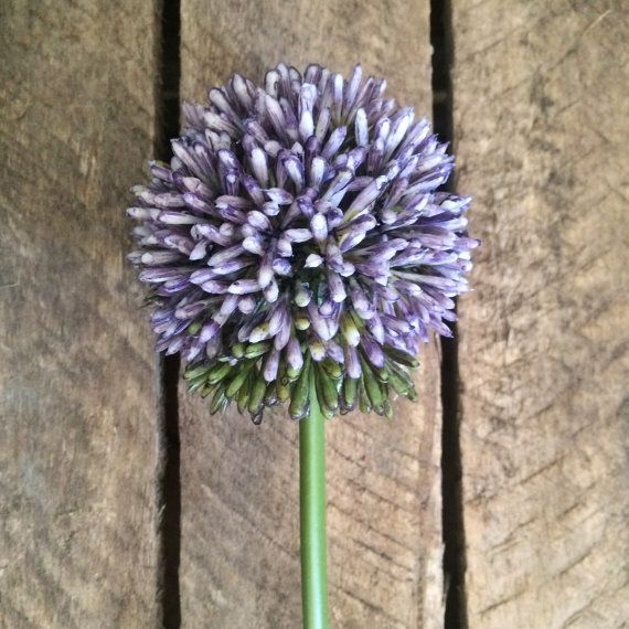 Redbird Allium From Heavenlyhomeflowers Shop On Etsy Wild Flower Arrangements Flowers Silk Flowers