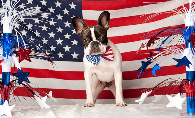 Three Barks For The Red White And Blue Patriotic Dogs Dog