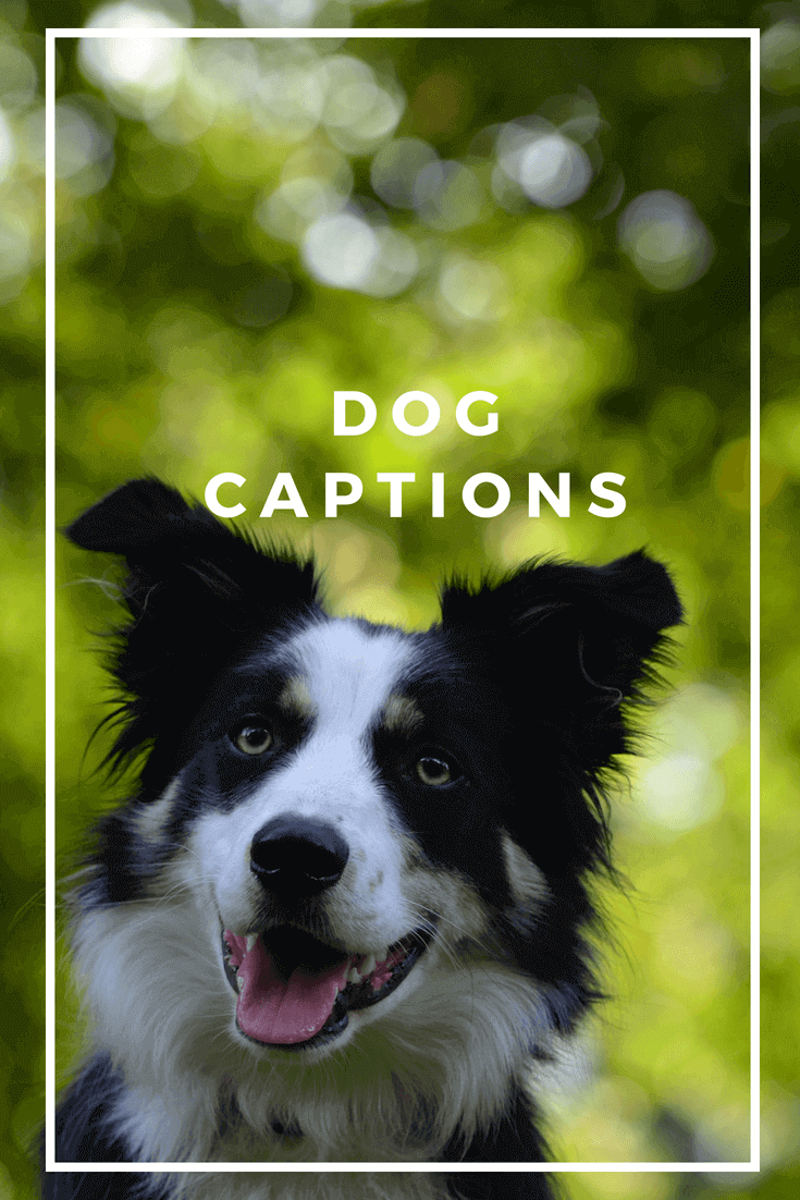 51 Dog Captions That Will Make You Want To Hug Your Dog Dog Instagram Captions Captions For Dog Pictures Funny Dog Captions
