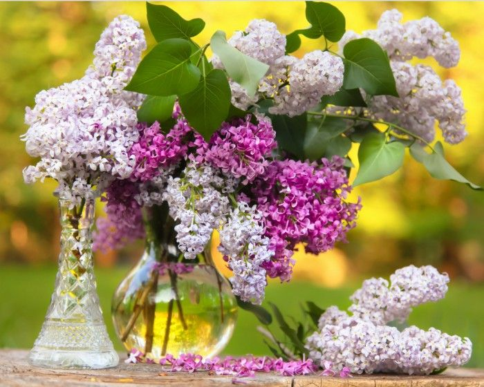 цветы на фото – 09 | Букет сирени, Сирень и Ваза