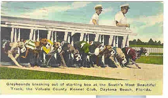 Daytona Dog Track >> Pc3482 Postcard Greyhounds Kennel Club Daytona Beach Florida