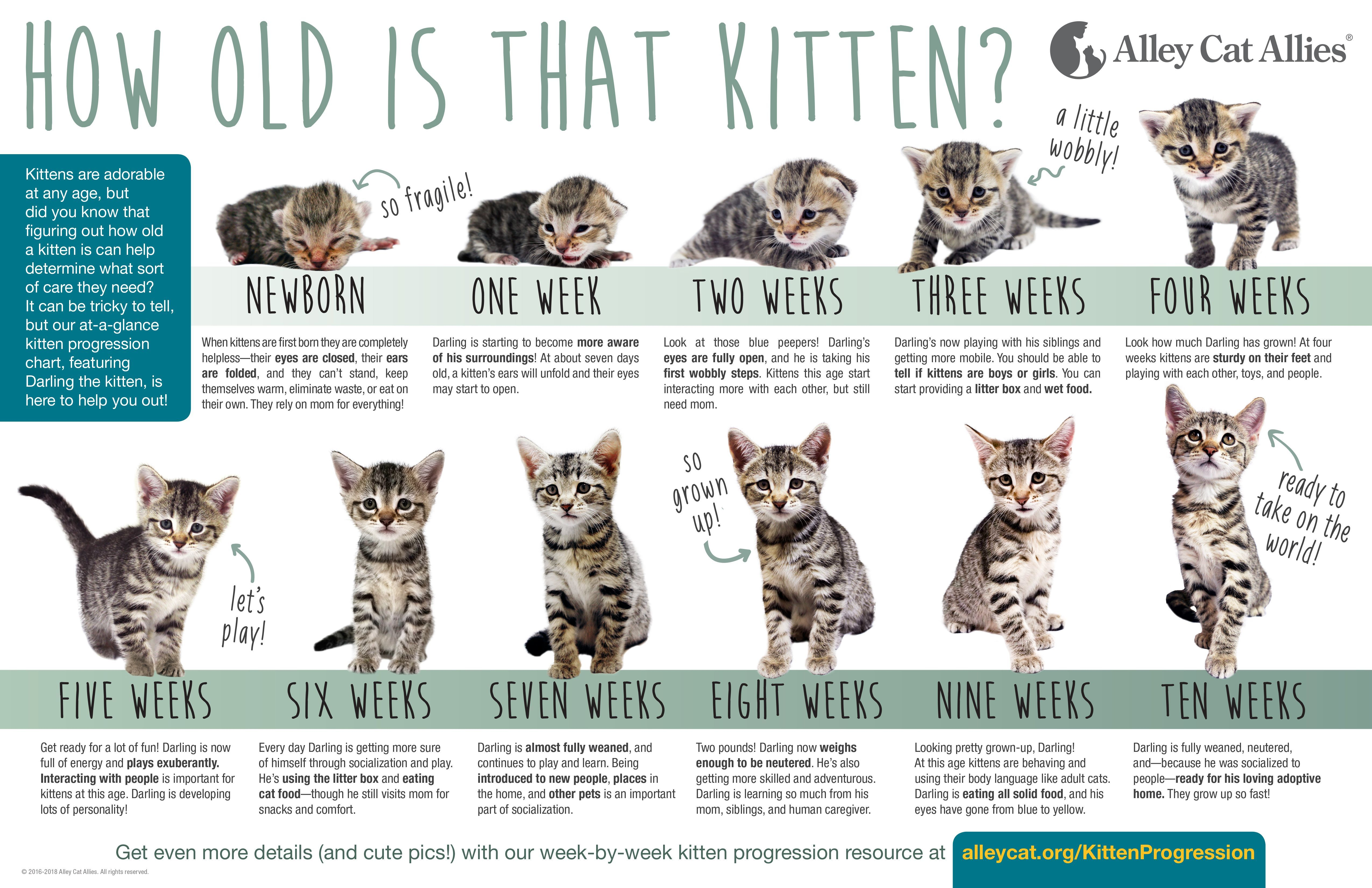 Kittens Kittens Kitten Season Is Here Kittens101 Kitten Season Alley Cat Allies Newborn Kittens