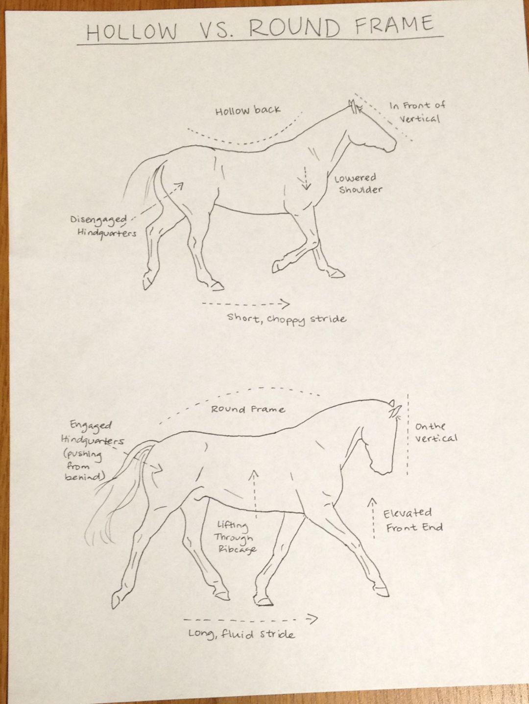 equestrian by myohodane horse information horse facts horse love show horses beautiful [ 1080 x 1440 Pixel ]
