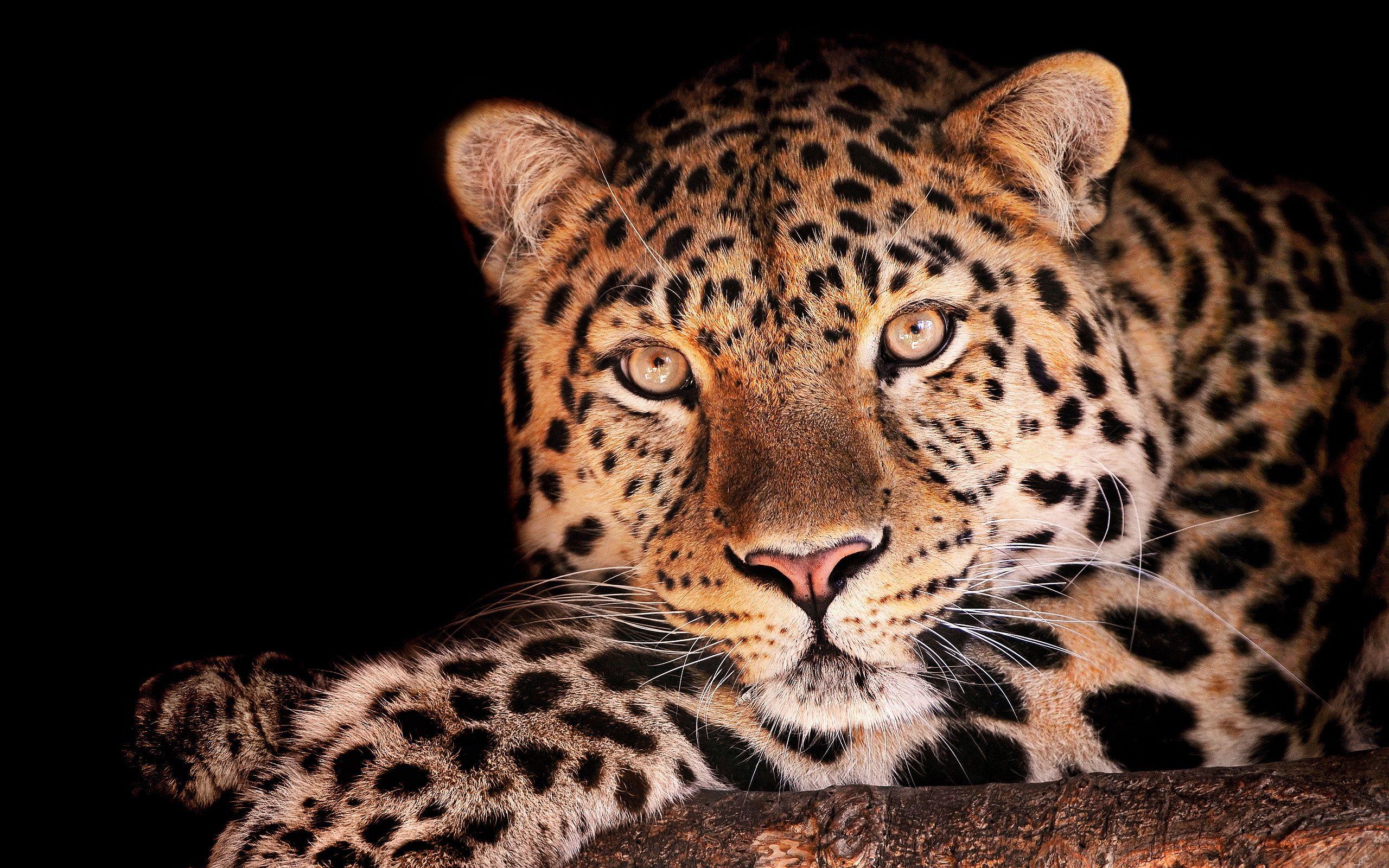 Top Wallpaper Mac Snow Leopard - 6bd2aa566818dc3f8dbfb2a9da9d046a  HD_111957.jpg