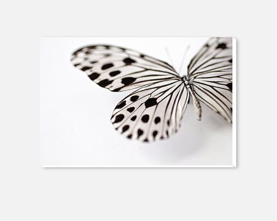 Butterfly Photography Canvas Print- Butterfly Wings Gallery Wrap ...
