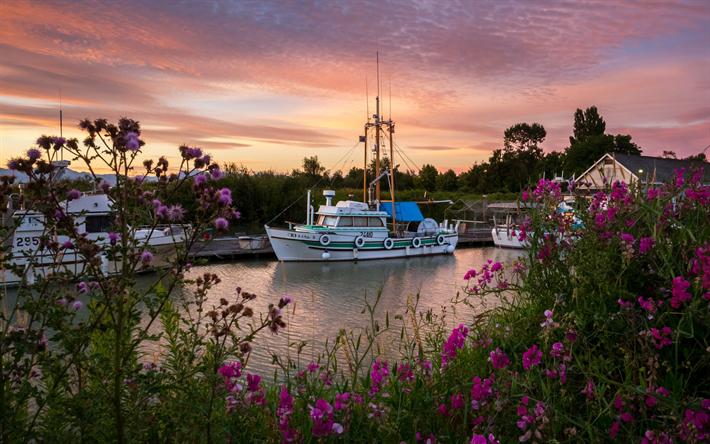 Lataa kuva Valkoinen veneitä, telakka, sunset, rose pensaat, Venesatamat, Kanada