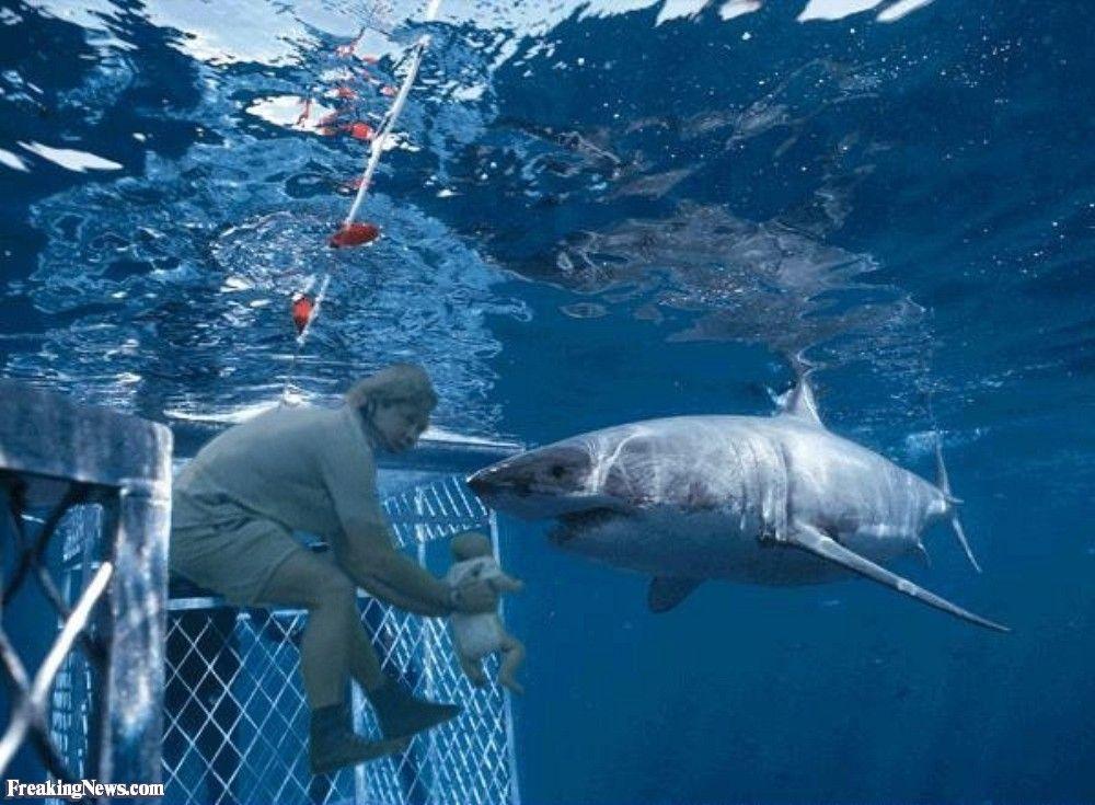 Steve Irwin Pictures - Freaking News | Australia | Great white shark