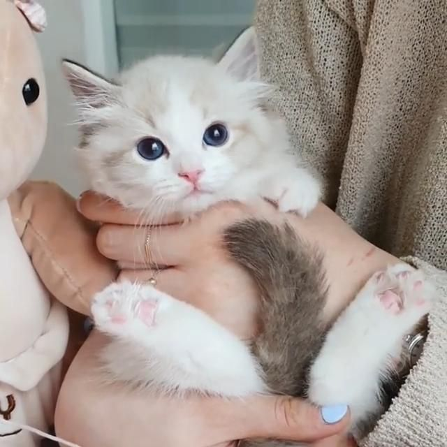 #animal#animals#animallovers#animales#animallover#animalprin#animalcrossing#animalkingdom#animalface#pet#pets#petstagram#petsagram#petsofinstagram#petscorner#petoftheday#cute#loveanimals#photooftheday#nature#cat#kitty