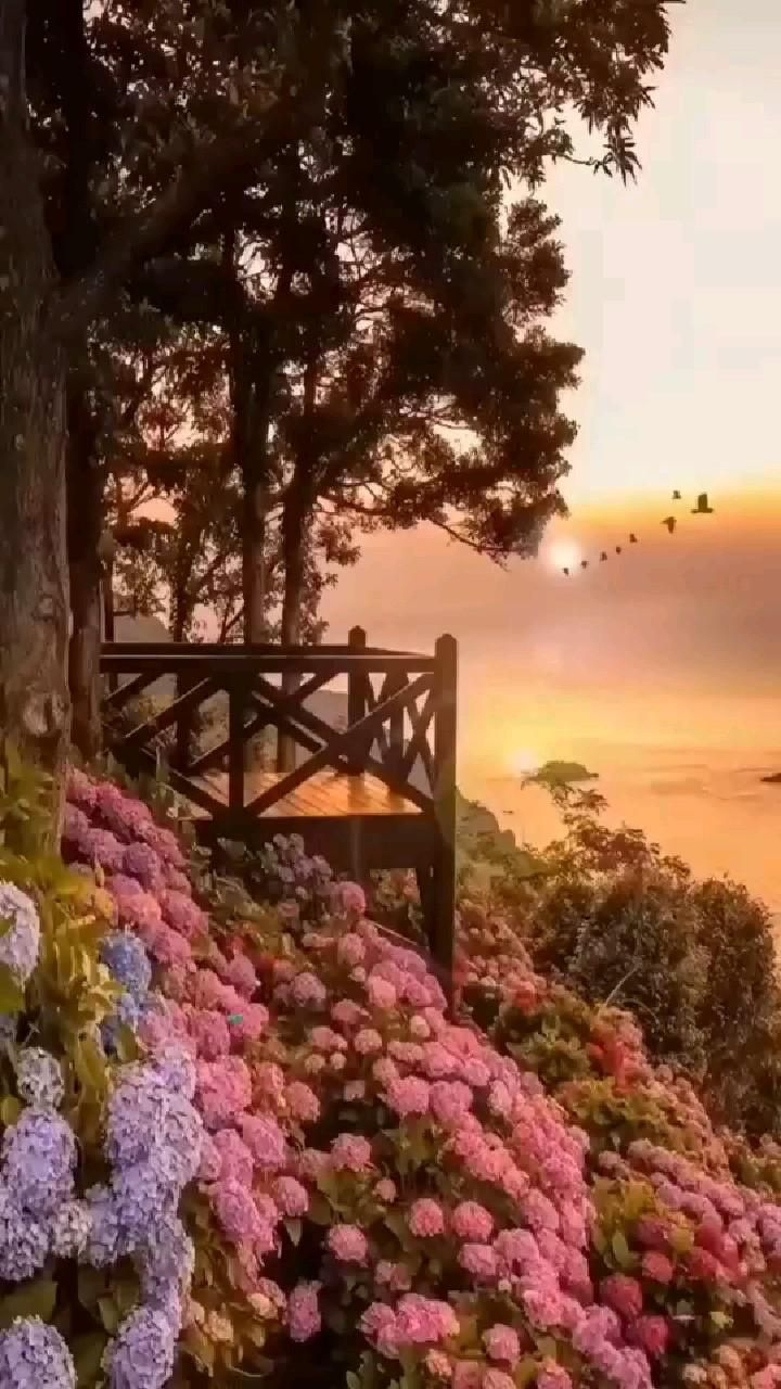 Nature flowers and SUNSET view / Beautiful nature view / nature vibe / Nature videos