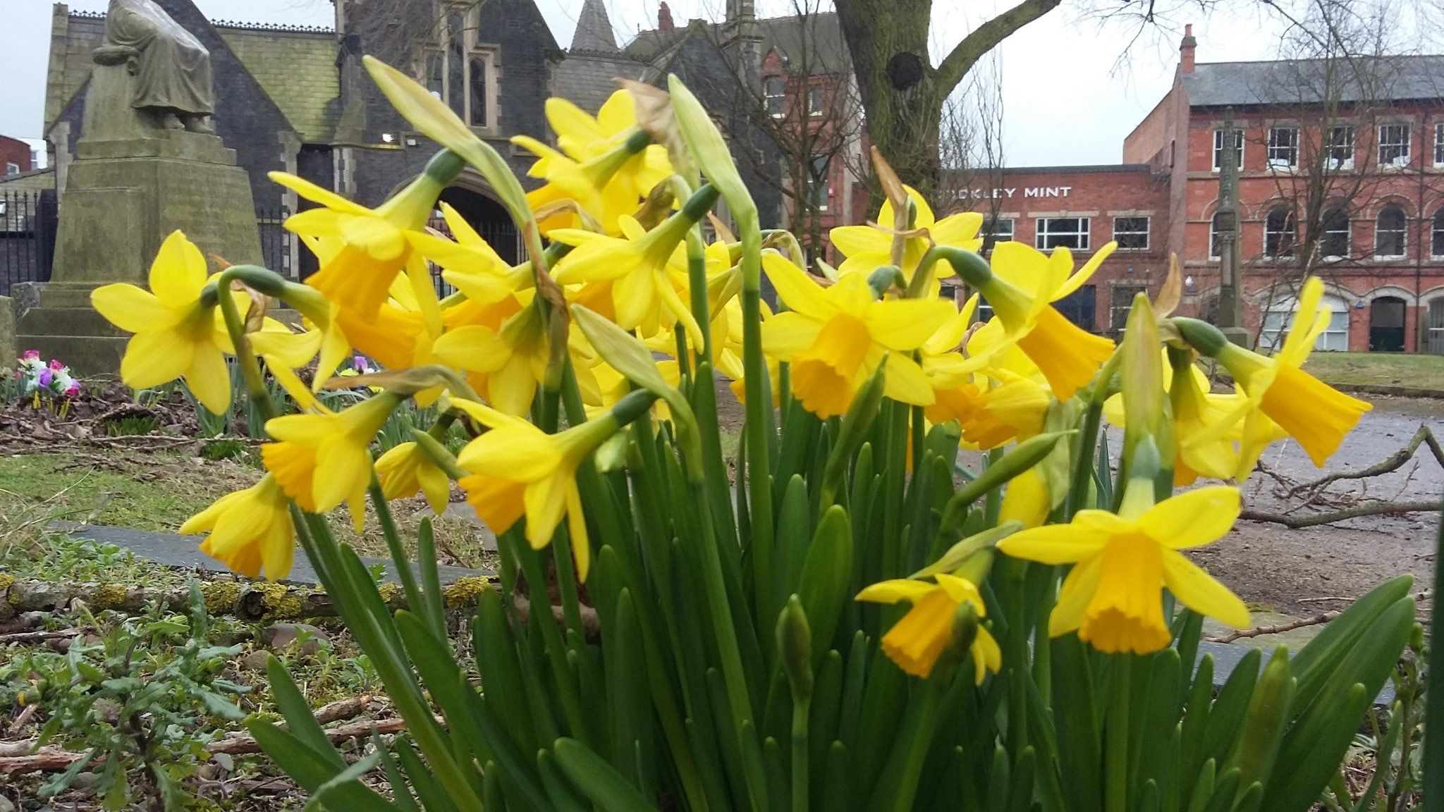 Beautiful Spring Flowers In The Jewellery Quarter Of Birmingham