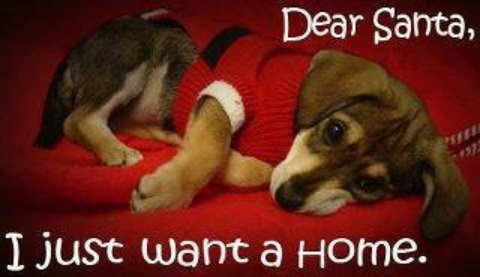 Pin by Jan Stein on Christmas (With images) Pet holiday