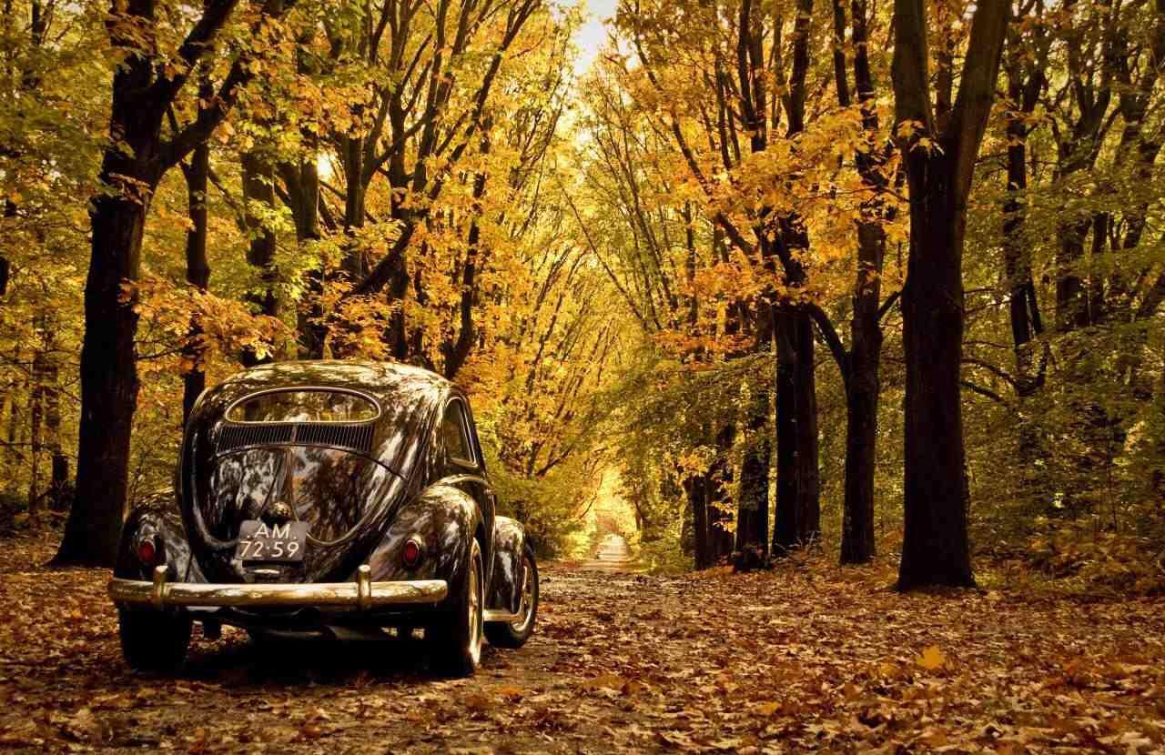 Image from http://wallpaperlepi.com/wp-content/uploads/2015/04/Volkswagen-Beetle-Wallpaper.jpg.