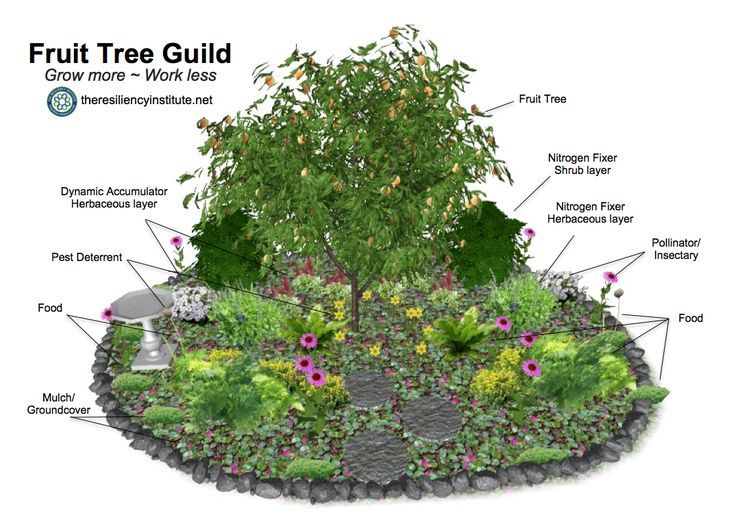 Example Of A Fruit Tree Guild Where Species Of Plants Are Interplanted With The Fruit Trees To Fee Fruit Tree Garden Permaculture Gardening Food Forest Garden