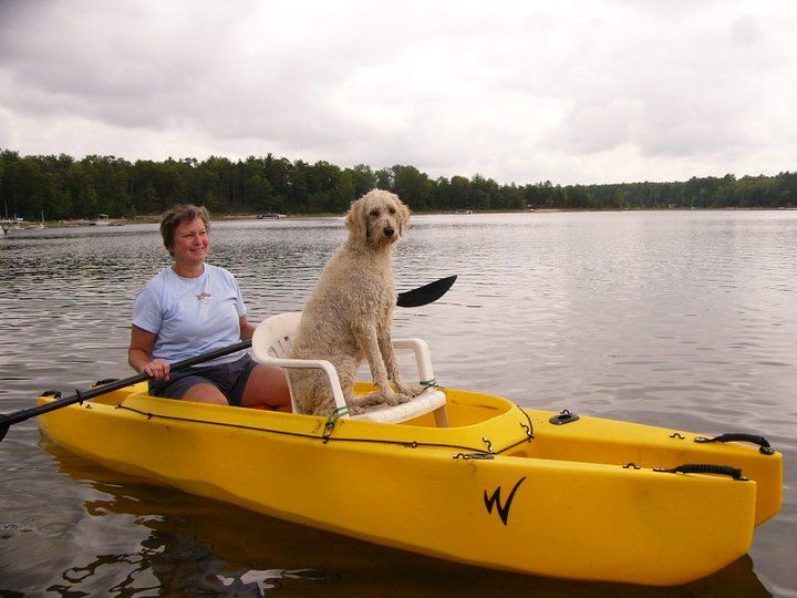 Dogs In Kayaks Google Search Kayaking With Dogs Happy