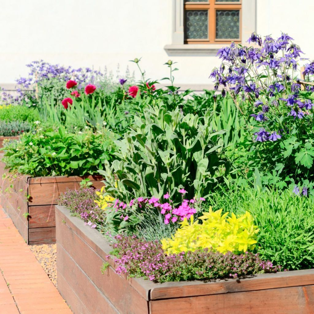Urban Vegetable Gardening For Beginners: The Prettiest Veggies To Plant In Your Flower Garden
