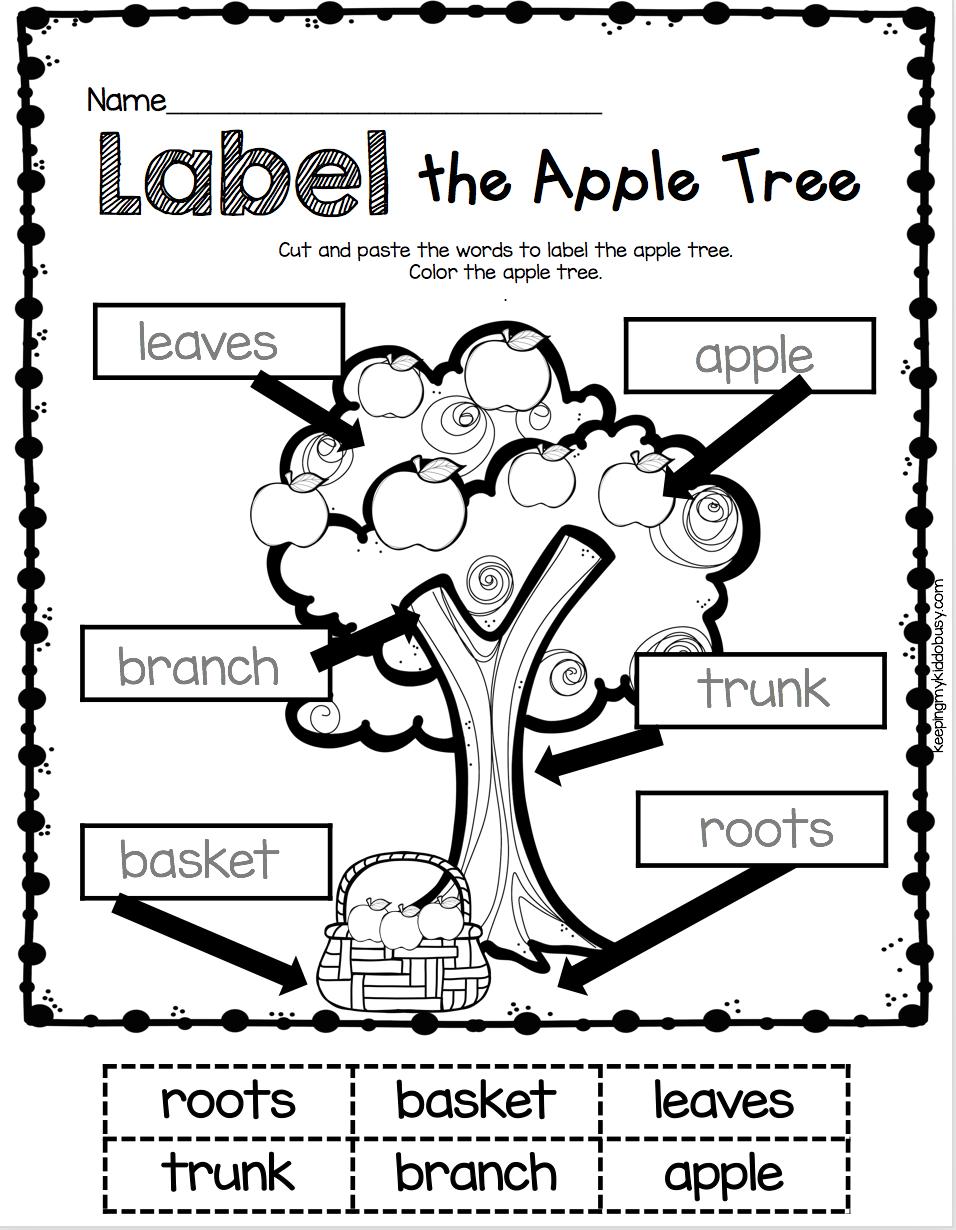 Labeling Kindergarten Label The Apple Tree Worksheet Literacy Center For Back To School In Sp Kindergarten First Day Fall Kindergarten Kindergarten Science [ 1230 x 956 Pixel ]