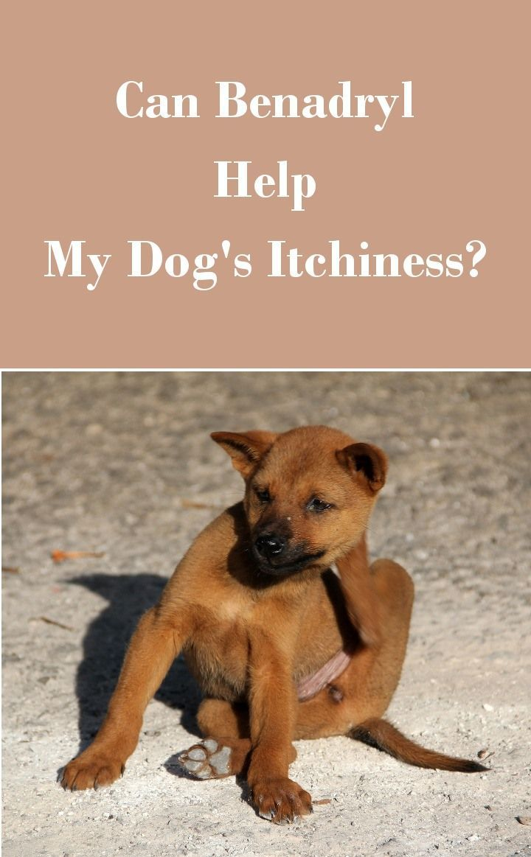 is benadryl safe for my dog | pinterest | dog, veterinarians and dog cat