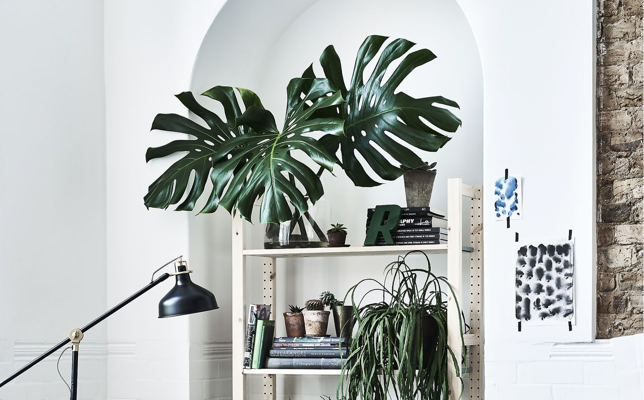 A white wall with shelving and artificial plants interior