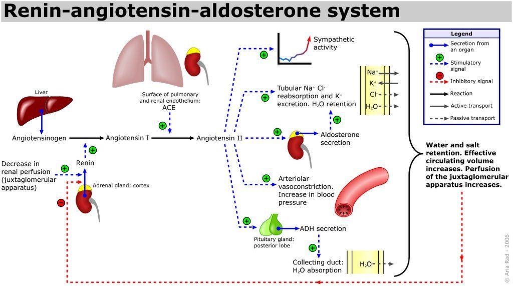 hyperaldosteronism diagnosis hyperreninemic hyperaldosteronism we
