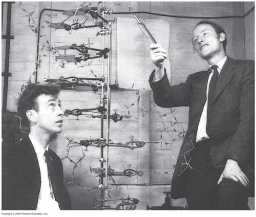 Watson And Crick With Model Of Dna Double Helix Dna Model Dna History James Watson