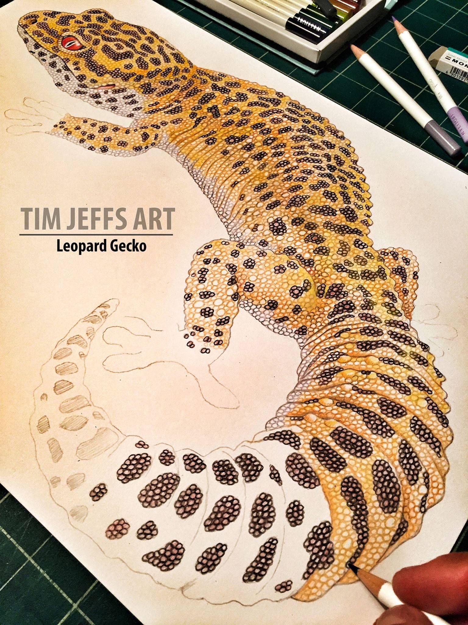 Malvorlage Leopard Gecko Kinder Ausmalbilder