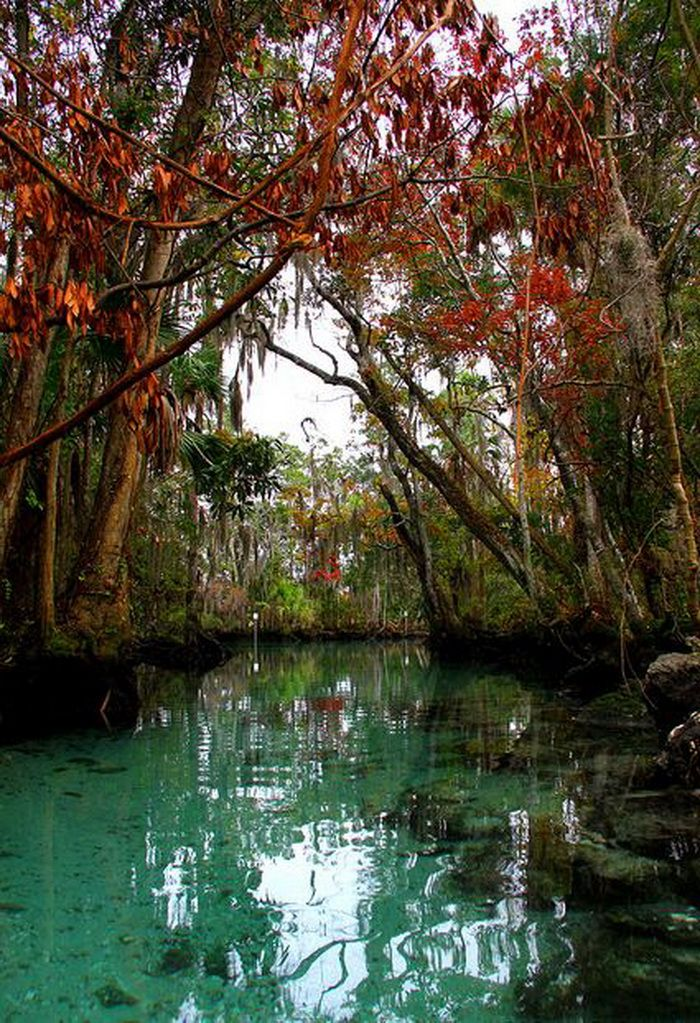 Fall colors along the Three Sisters Spring in... Florida