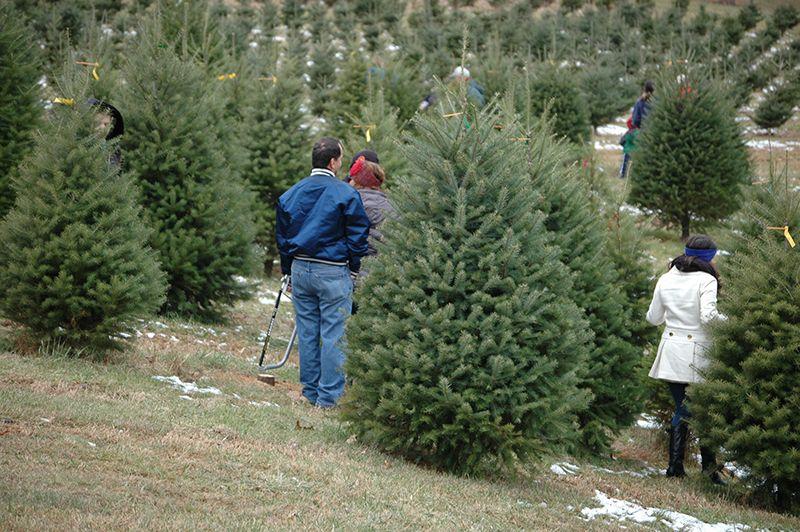 Dog Friendly Tree Farm Sykesville | Pine valley, Christmas ...