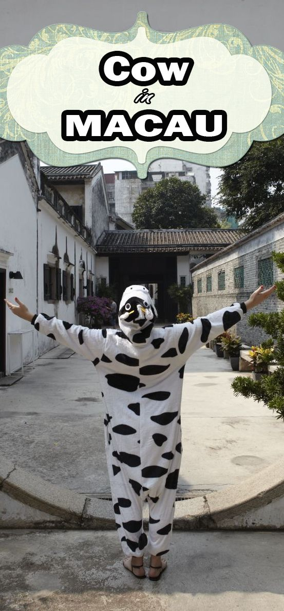 What is the cow doing?