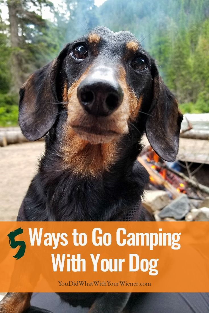 5 different ways to camp with your dog dog camping